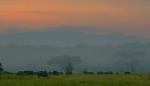 Dawn breaks over buffalo herd