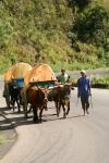 Traditional Malagassy bullock carts